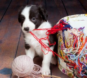 Dog Tangled Up in Yarn - The Morty Blog